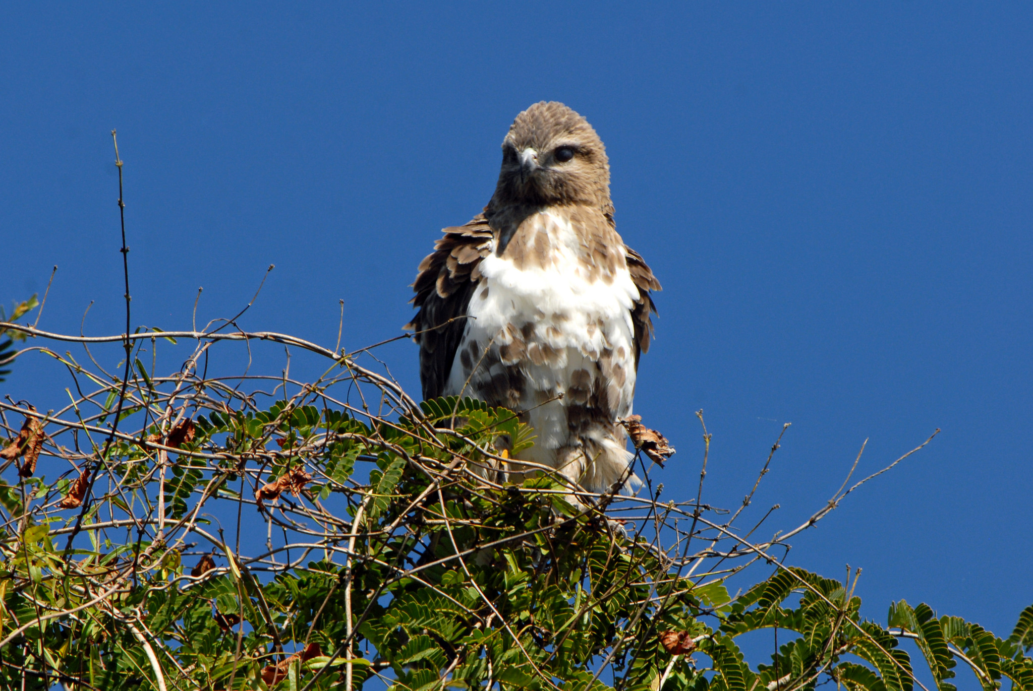 oiseau sur son nid madagascar