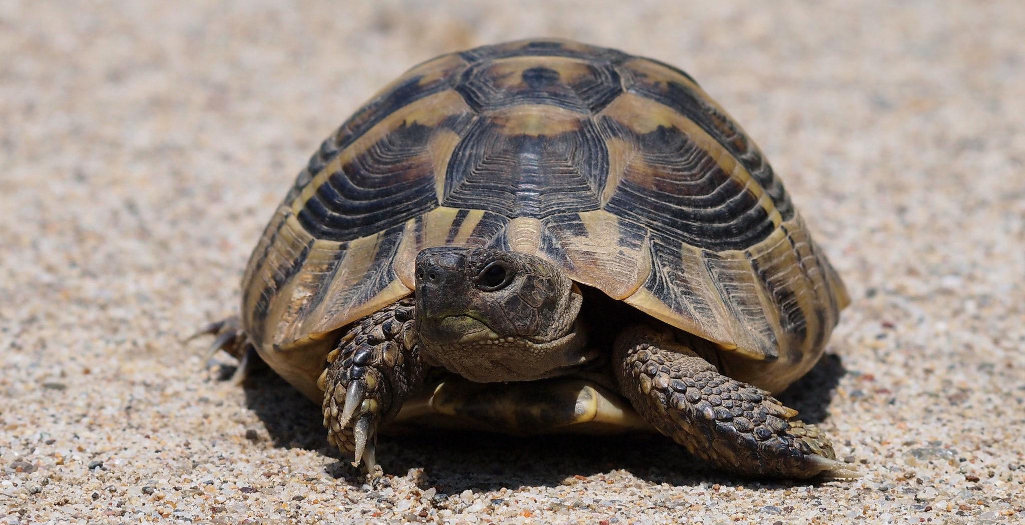 D couvrez les tortues de madagascar office national du tourisme de madagascar - Office national du tourisme madagascar ...