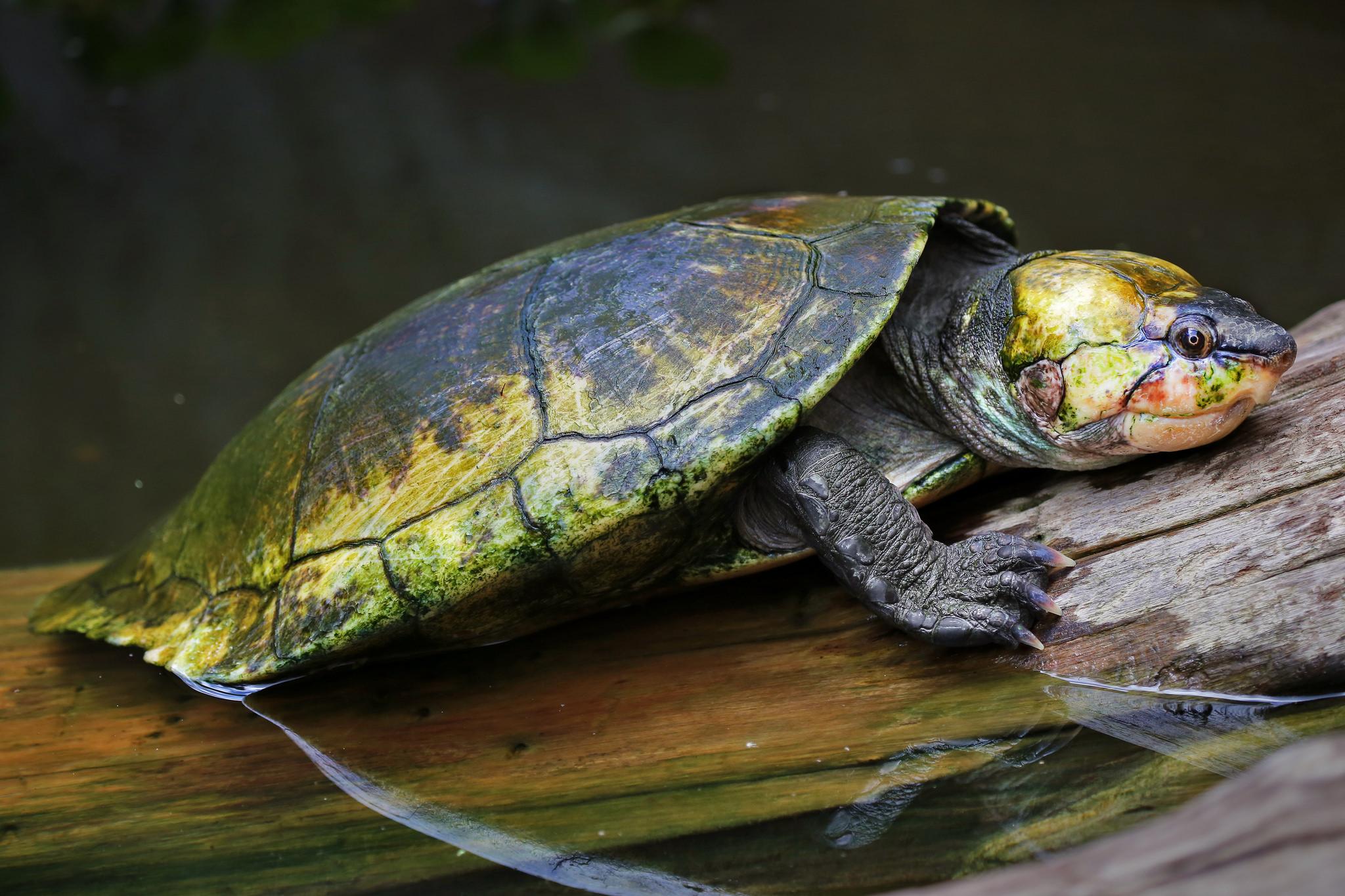 bébé tortue marine madagascar