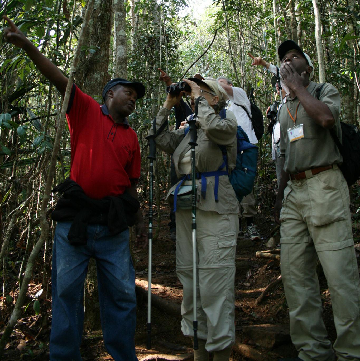 Il parco nazionale d 39 andasibe mantadia office national du tourisme de madagascar - Office national du tourisme madagascar ...