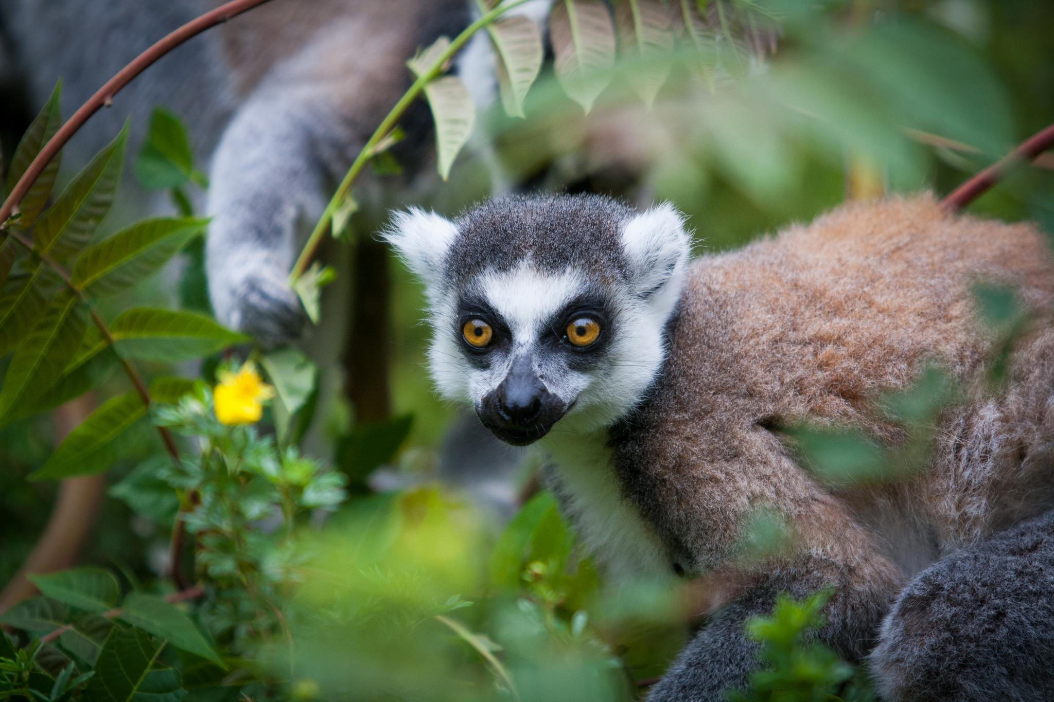 lemur's park antananarivo madagascar