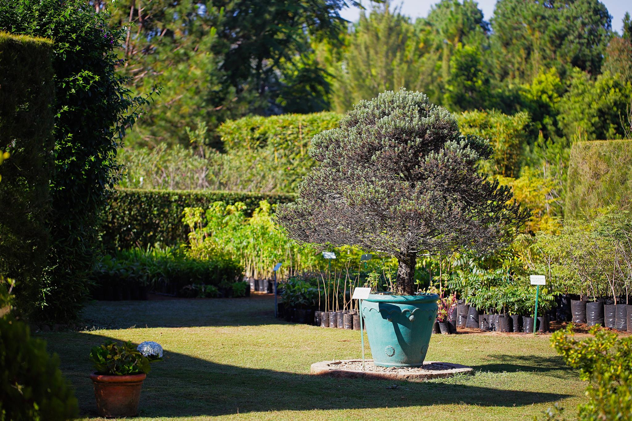 jardin botanique tsimbazaza madagascar