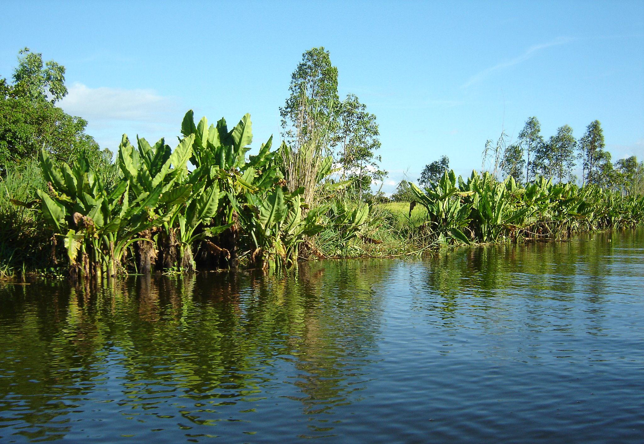 mangrove plante endémique madagascar