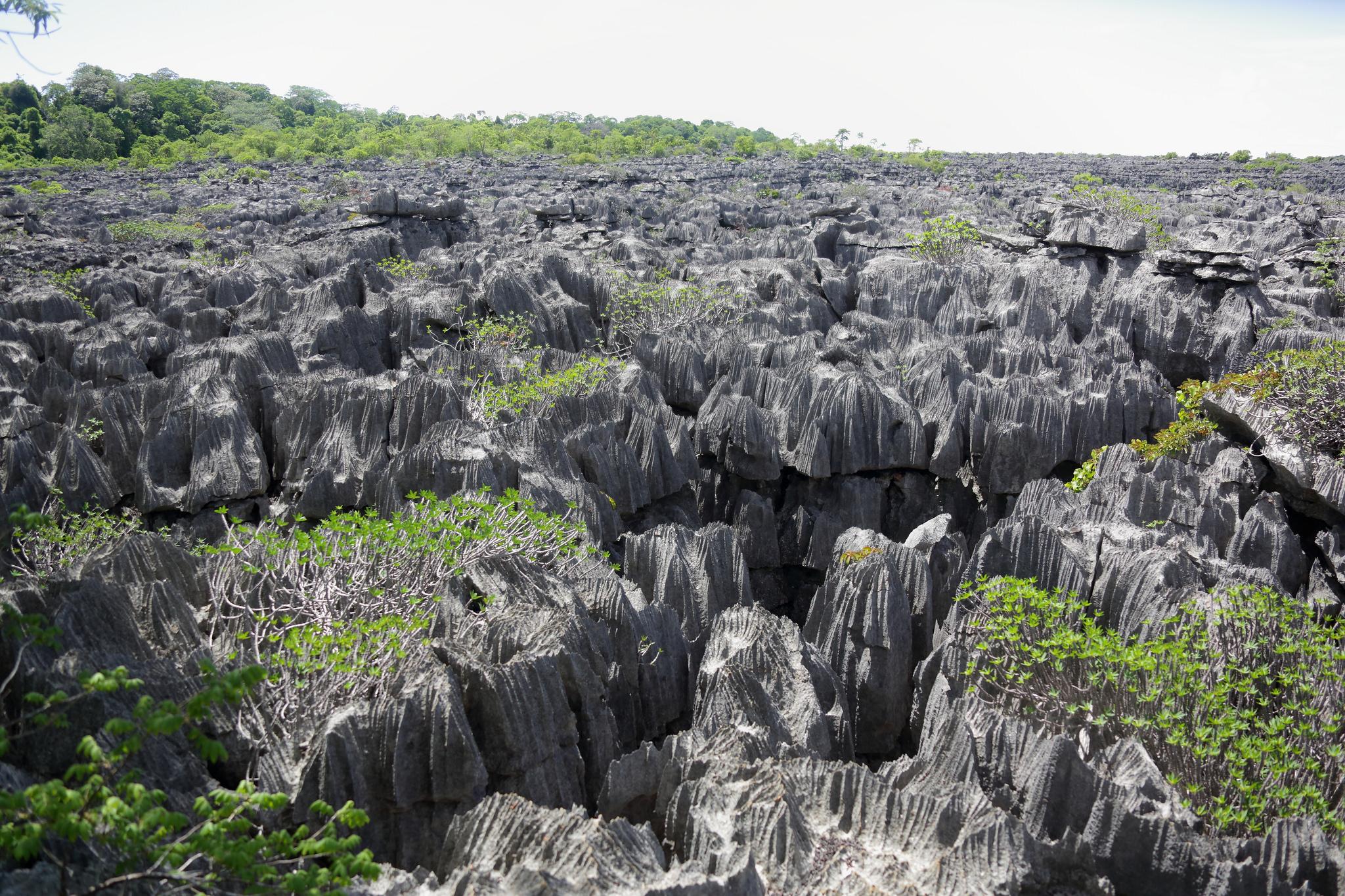 réserve spéciale ankarana tsingy madagascar
