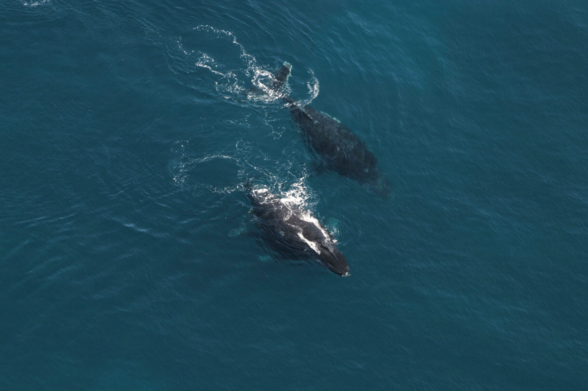 observation baleine a bosse madagascar