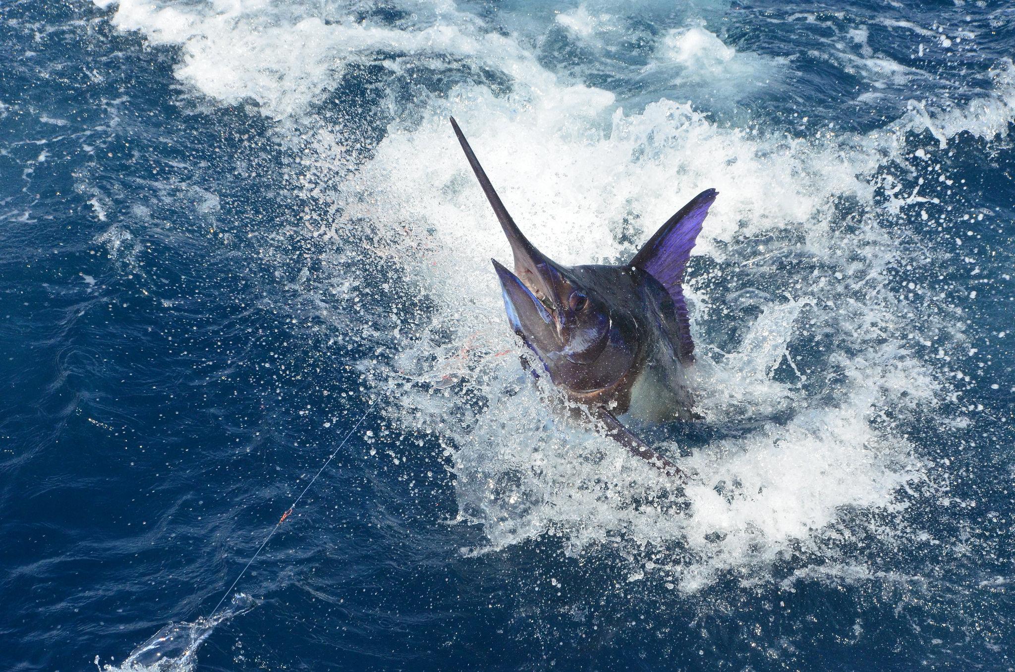 pêche sportive espadon madagascar
