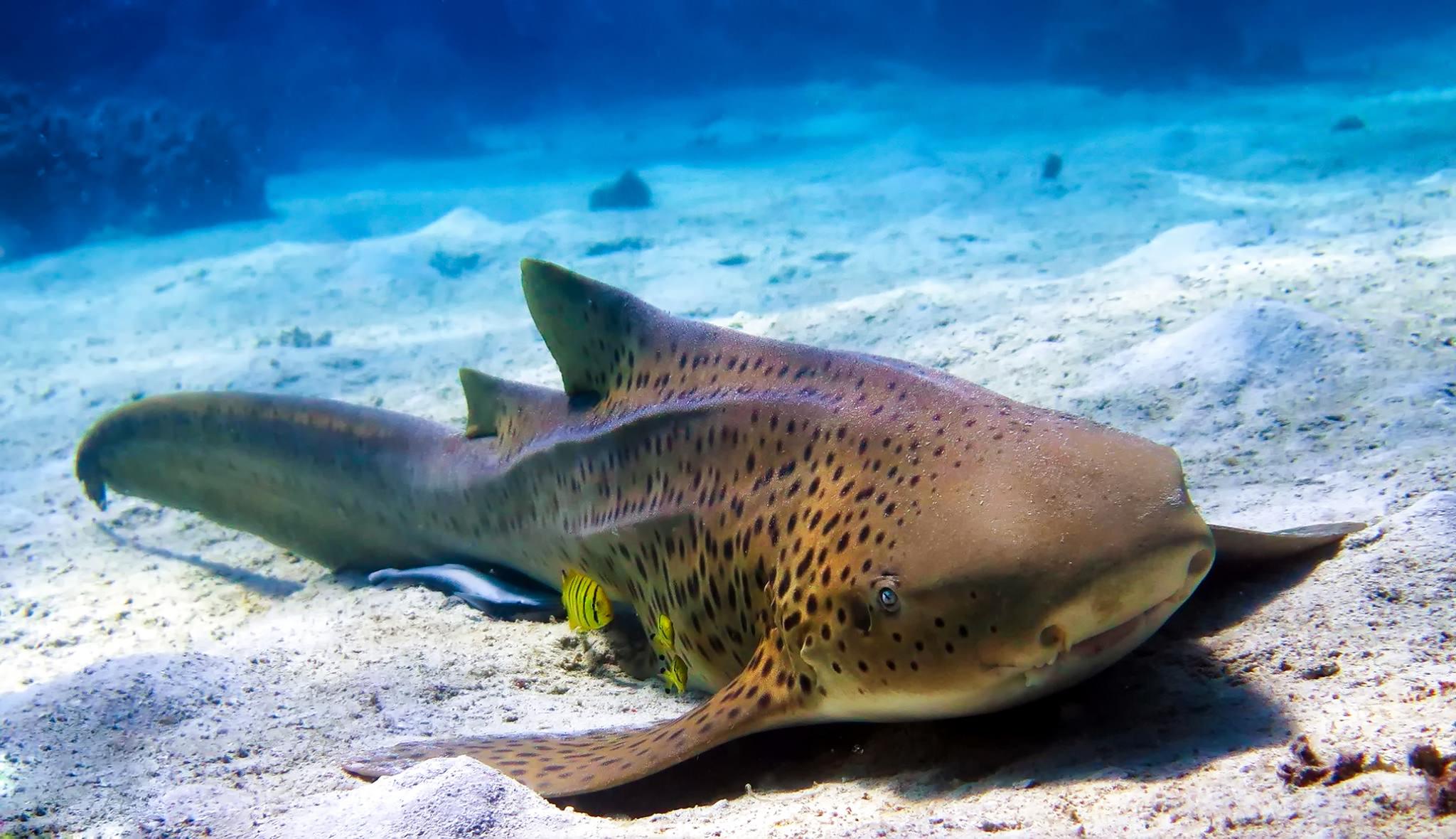 animaux sous-marins plongée madagascar