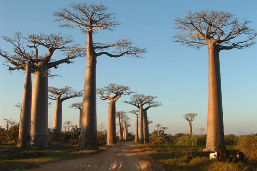 MADAGASCAR TOURING - 0