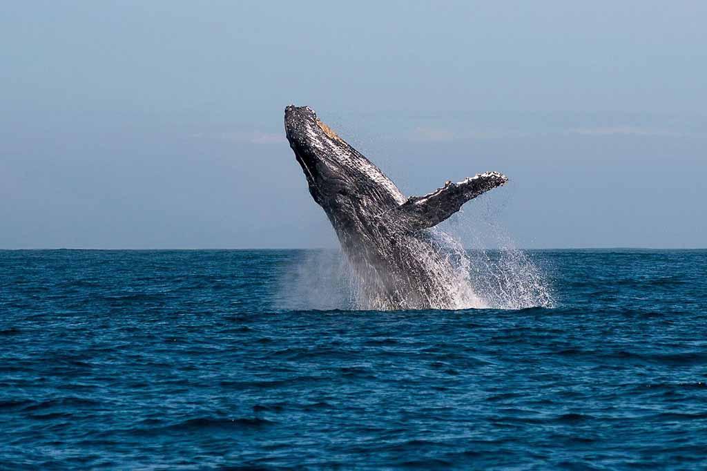 Whale Festival - 0