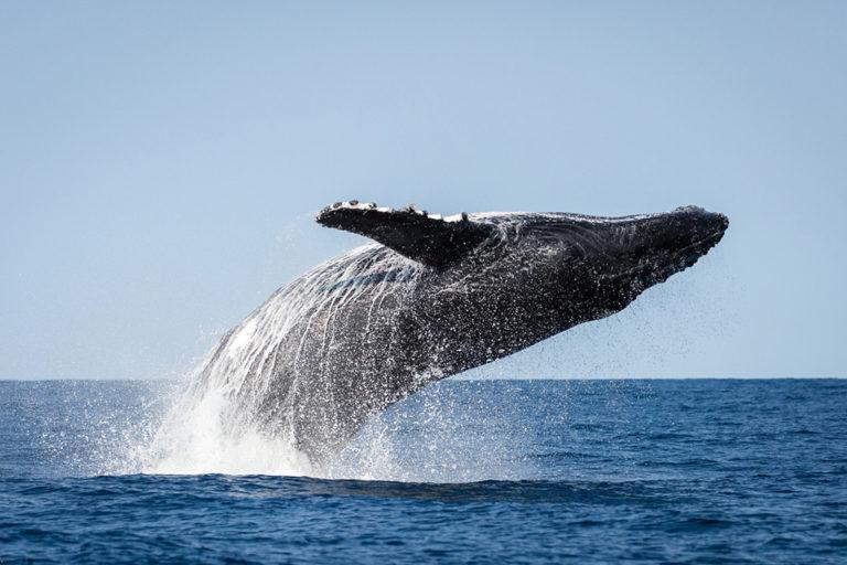 Festival delle balene su l'isola santa sposa